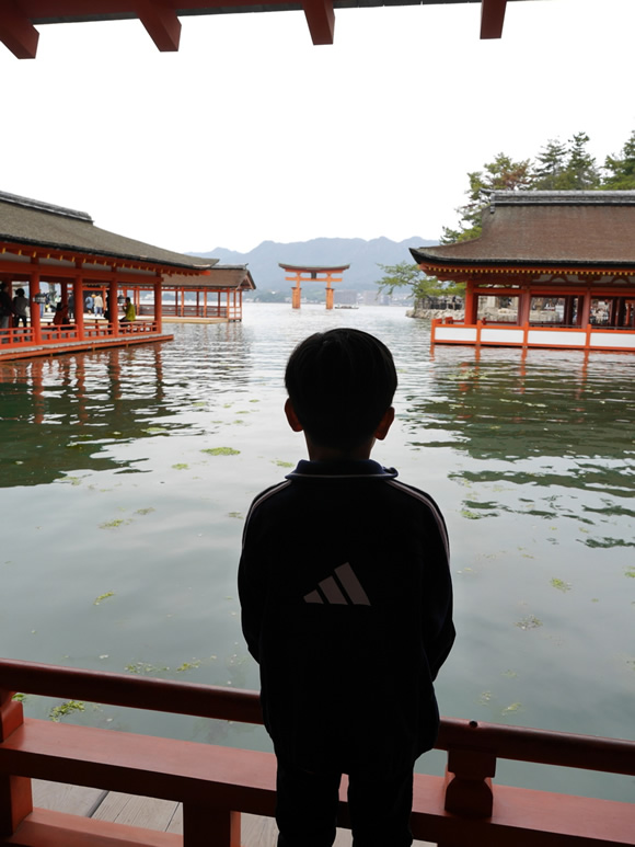 "Roy gazes at the ""floating gate"" from Itsukushima Shrine."