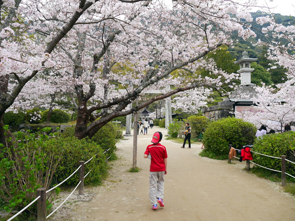 The Beauty of Cherry Blossoms and Bilingual Children