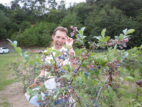 Picking blueberries is one of life's little joys.