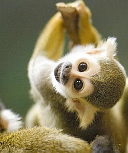 Lulu was probably a little squirrel monkey in a previous life.