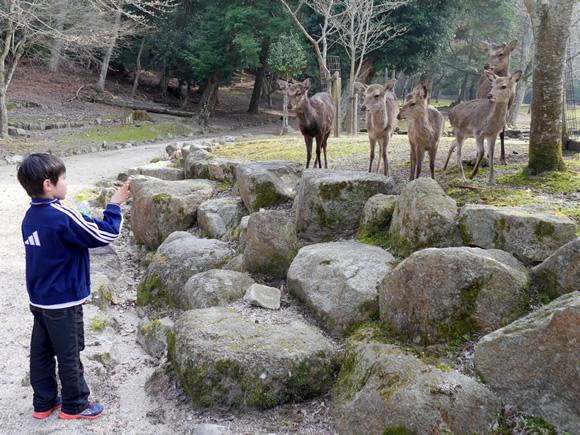 Roy commands the deer.