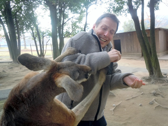Adam is attacked by a hungry kangaroo.