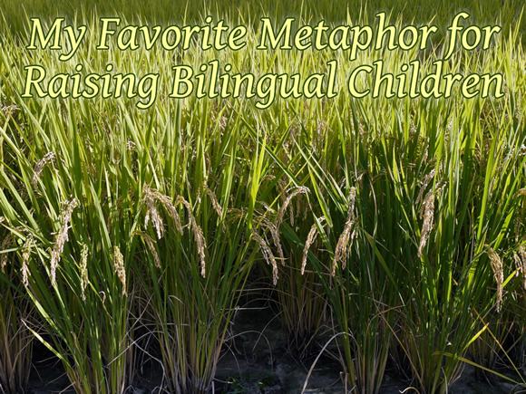My Favorite Metaphor for Raising Bilingual Children