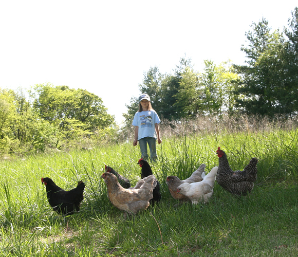 Zita and her chickens