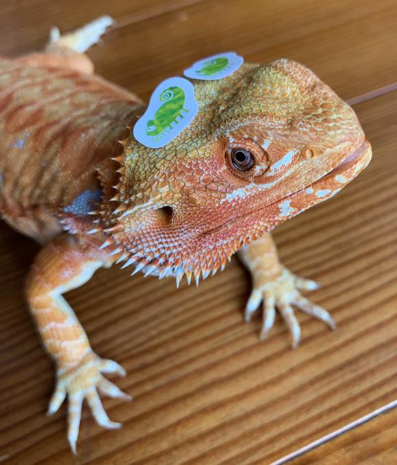 Chameleon Reader